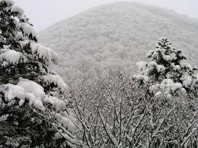 雪害に対する保険
